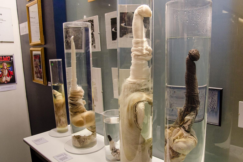 Icelandic Phallological Museum in Reykjavik