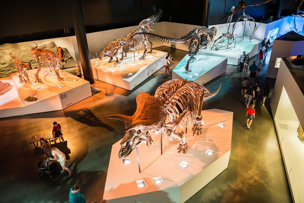 Houston Museum of Natural Science in Texas, USA