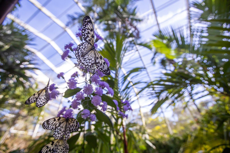 Fairchild Tropical Botanic Garden in Florida, USA