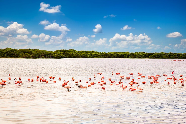 Flamingos at a lagoon Rio Lagartos, which is part of a natural reserve in Yucatan, Mexico