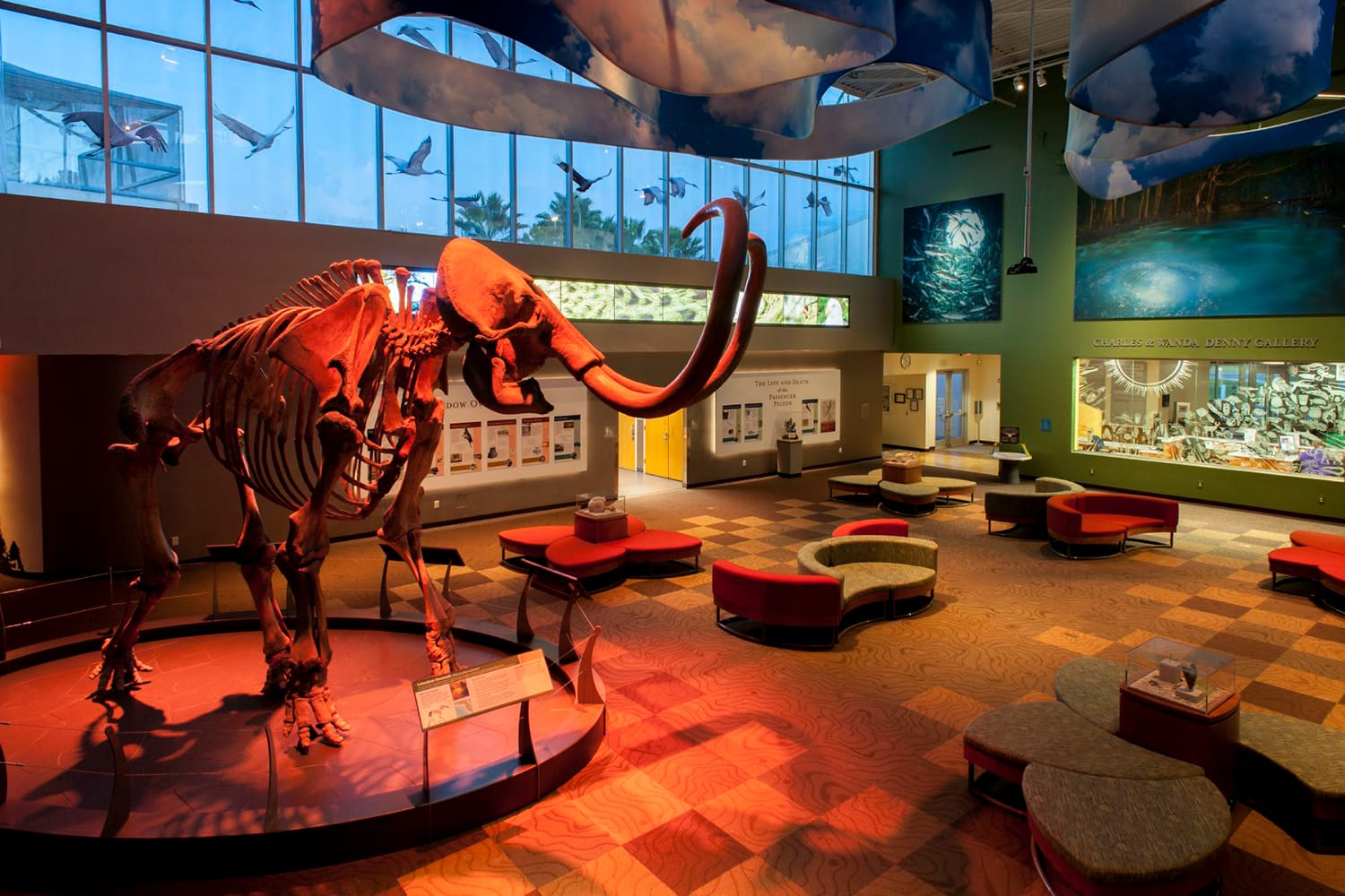 Florida Museum of Natural History in Gainesville, Florida, USA