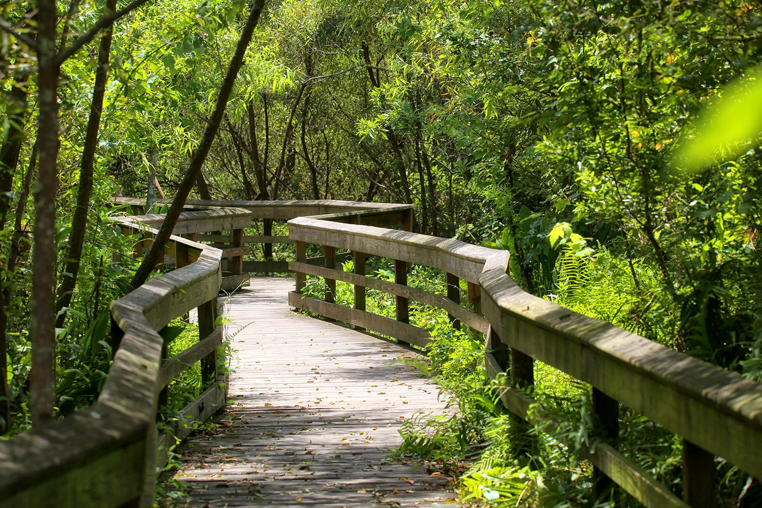 Pathway at Mead Botanical Gardens in Winter Park, Florida, USA