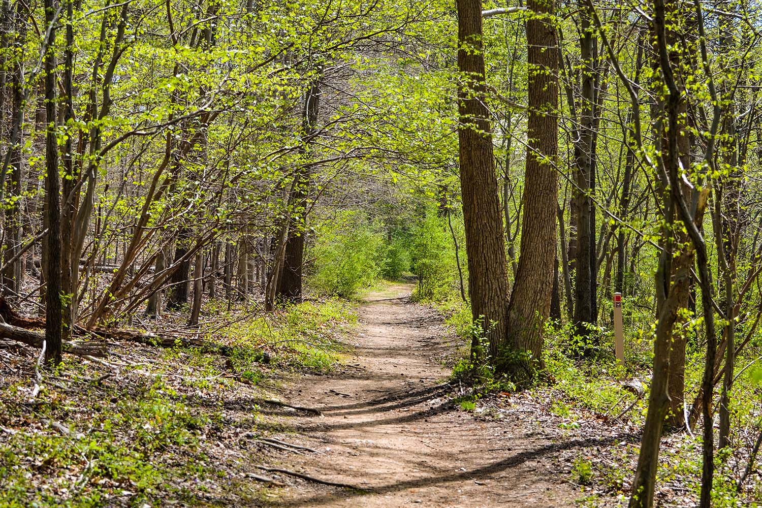 Trail through the woods along the Brandywine creek in Delaware, USA